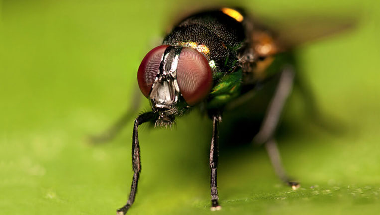 flying-insect-services